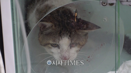 동물자유연대, '화살촉이 머리에 박힌 길고양이 사건' 군산경찰서에 고발