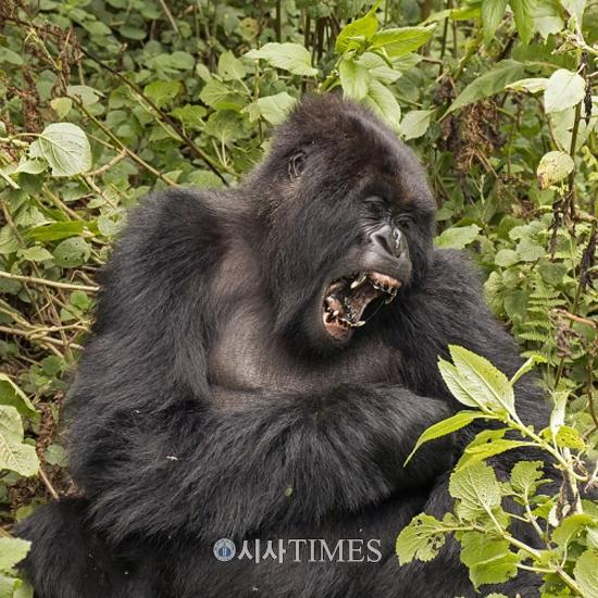영원한 KOICA man 송인엽 교수 [나가자, 세계로! (64)] 36. D. R 콩고(D. R Congo)